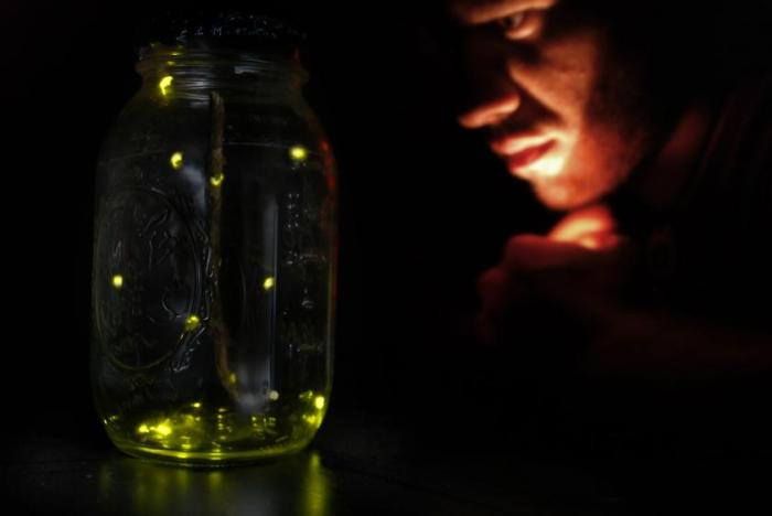 firefly-light